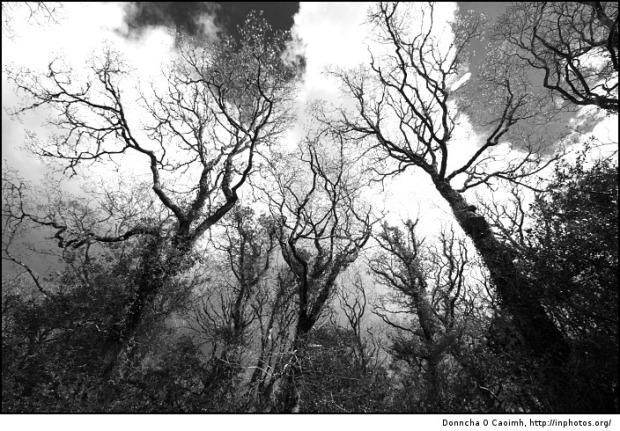 haunted-trees