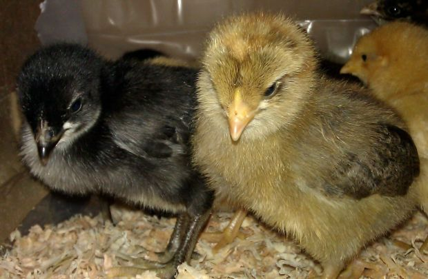 We are chicks with 'tude!