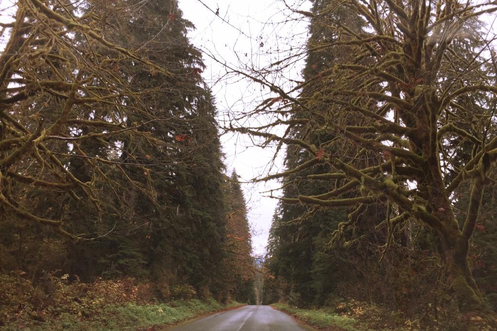 concreteroadcreepytrees